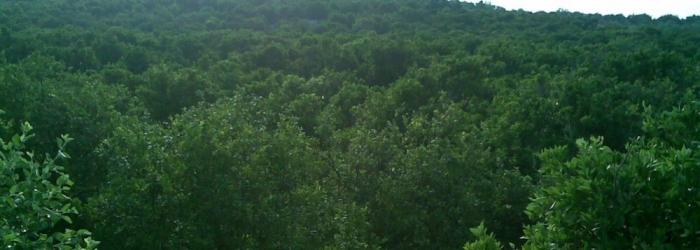 اشجار الفواكة في البلدة